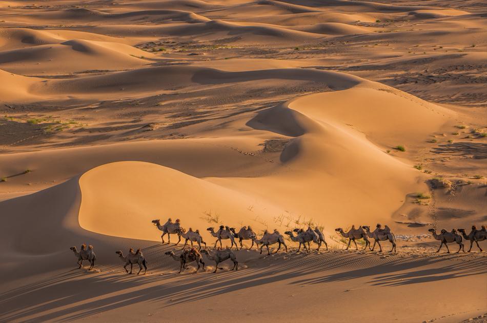 Mongolia_landscape_photo_Khongor_sand_dune