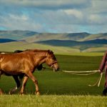 Pictures-of-Mongolian-Horse